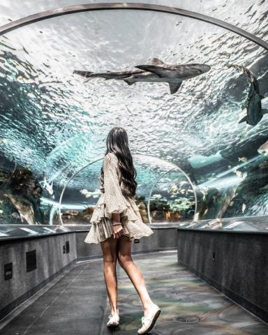 Ripley's Aquarium of Canada - Dangerous Lagoon